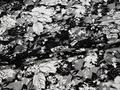 Гипюр черно-белый цветы полиэстер эластан БВ546