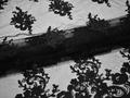 Сетка черная с вышивкой полиэстер БГ615