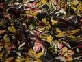 Шифон черный желтый цветы полиэстер ЕВ431